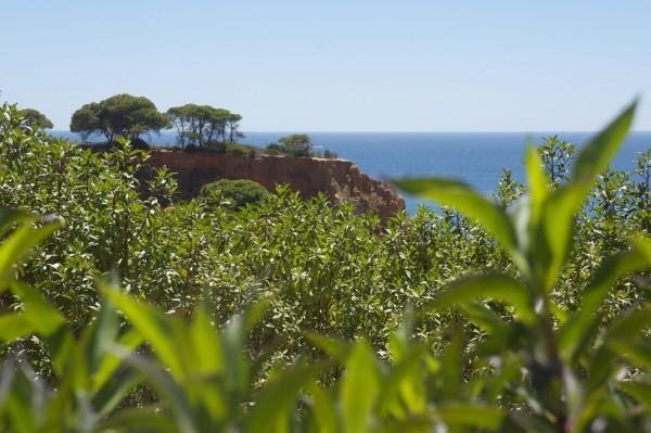 Playa Albufeira Algarve Portugal (8)