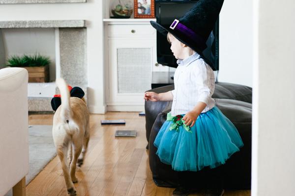 perro en casa-2